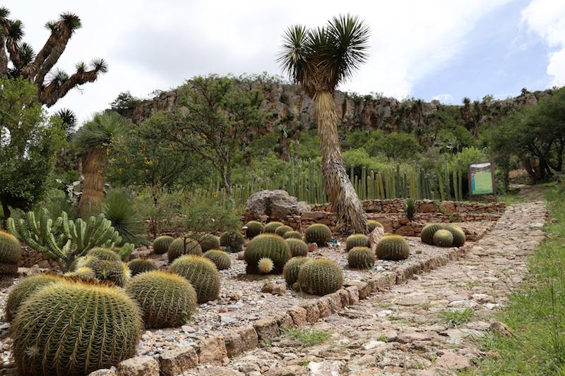 2_Jardin Botánico Manuel González de Cosío, Cadereyta, Querétaro